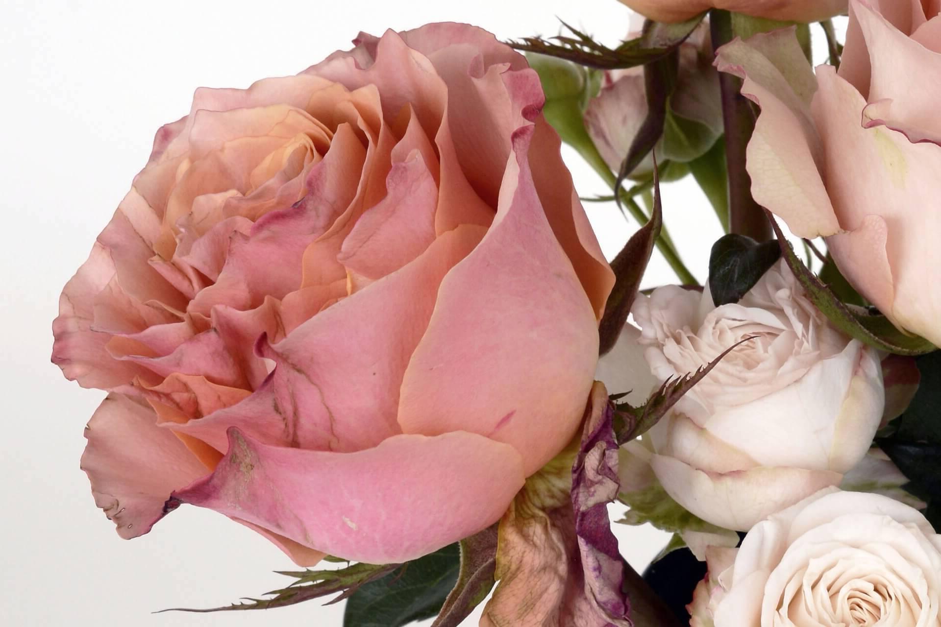 ¿Como enviar ramos de flores a Santa Cruz de Moya?