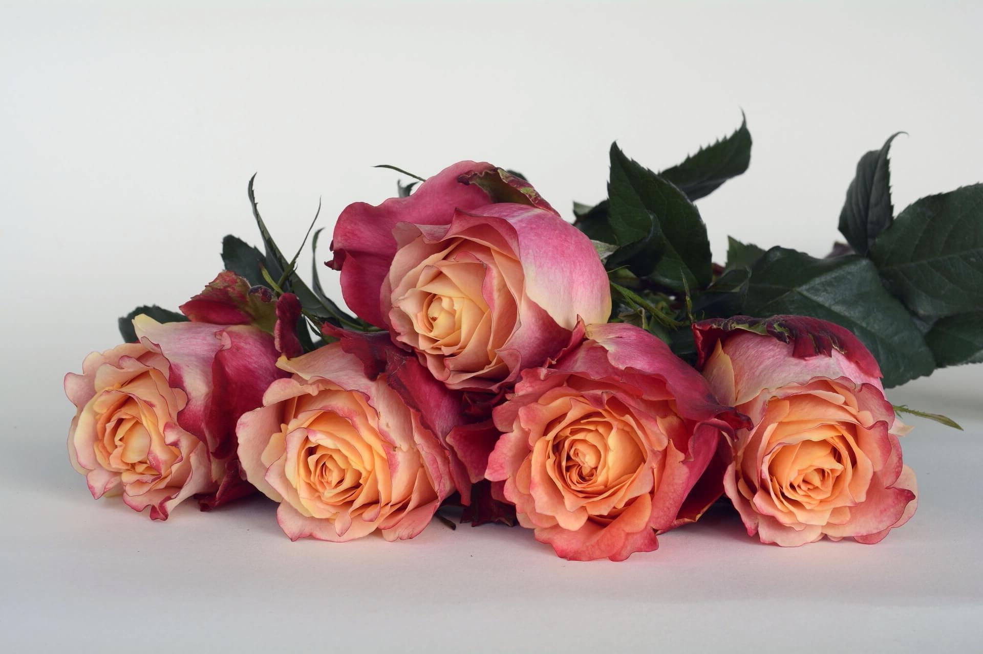 ¿Como mandar ramos de flores a Soria?