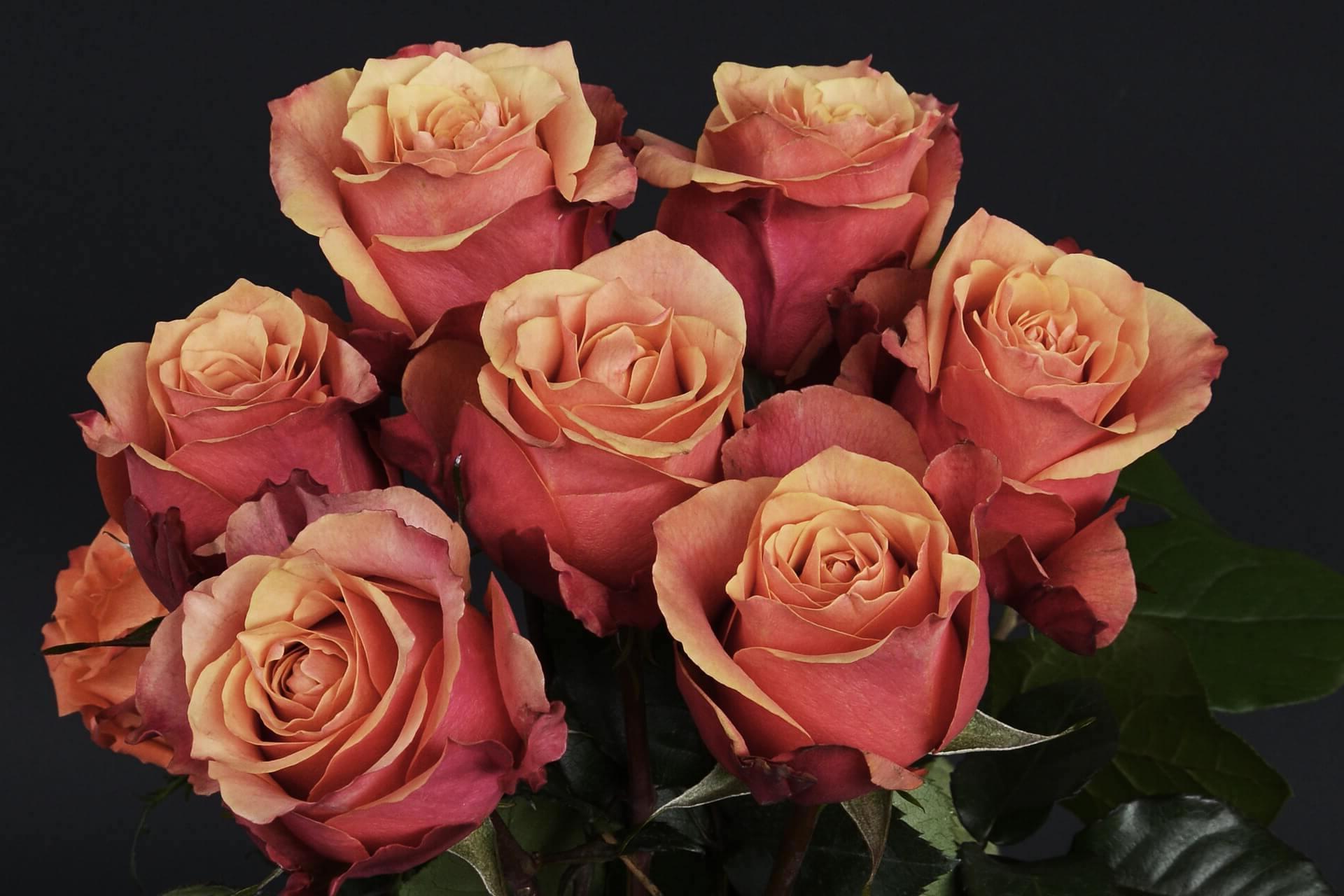 ¿Como mandar ramos de flores a Leon?