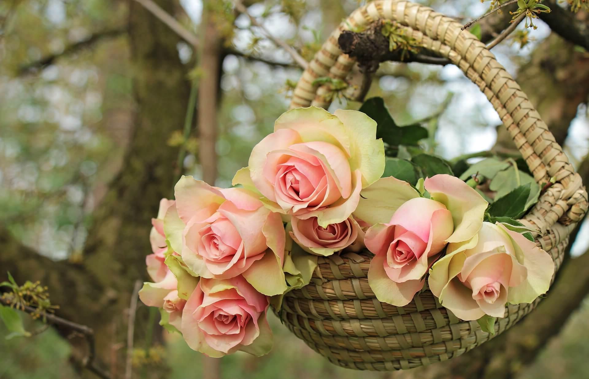 ¿Como mandar ramos de flores a Burgos?