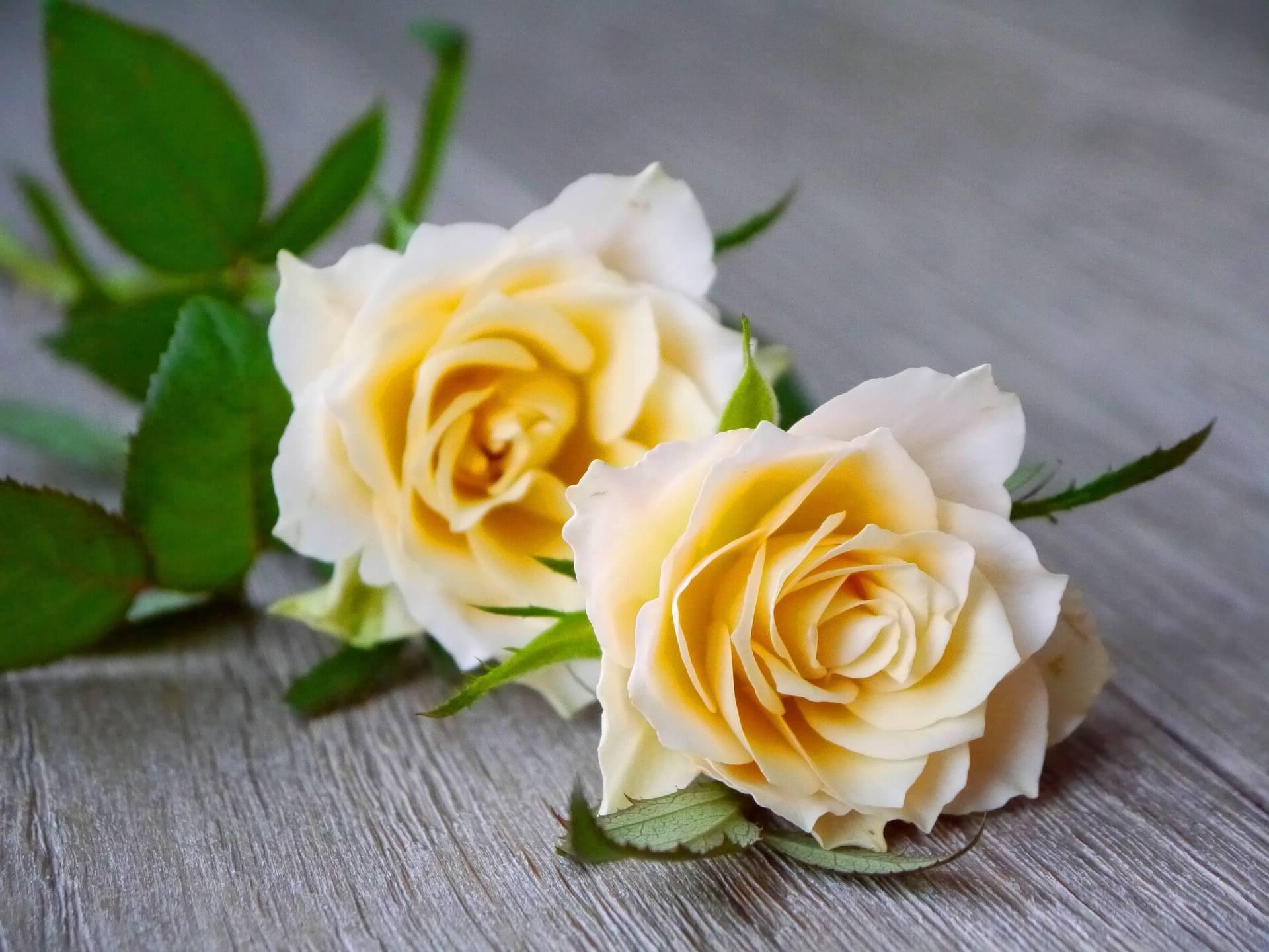 ¿Como enviar ramos de flores a Ventosa del Rio Almar?