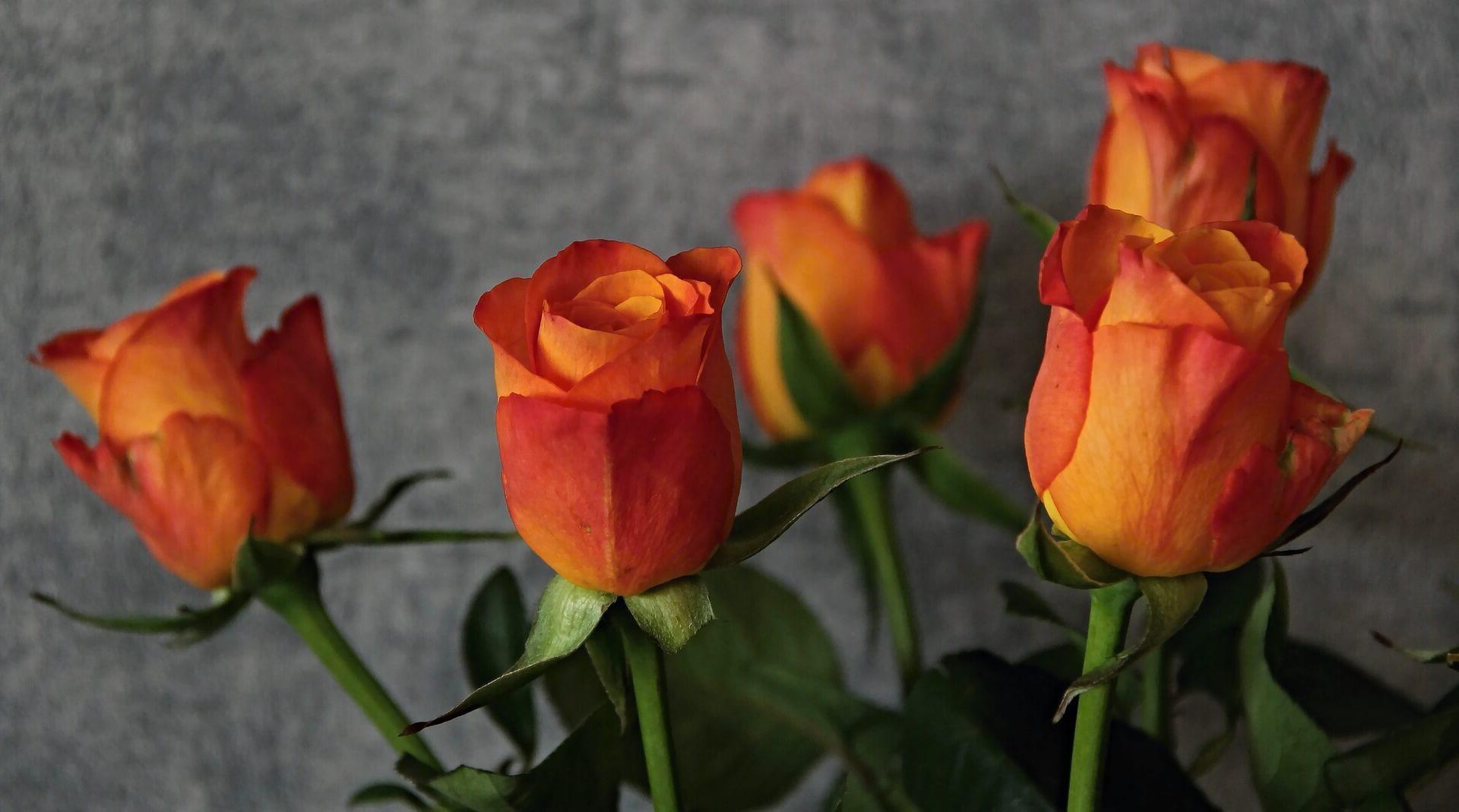 ¿Como enviar ramos de flores a Pontevedra?