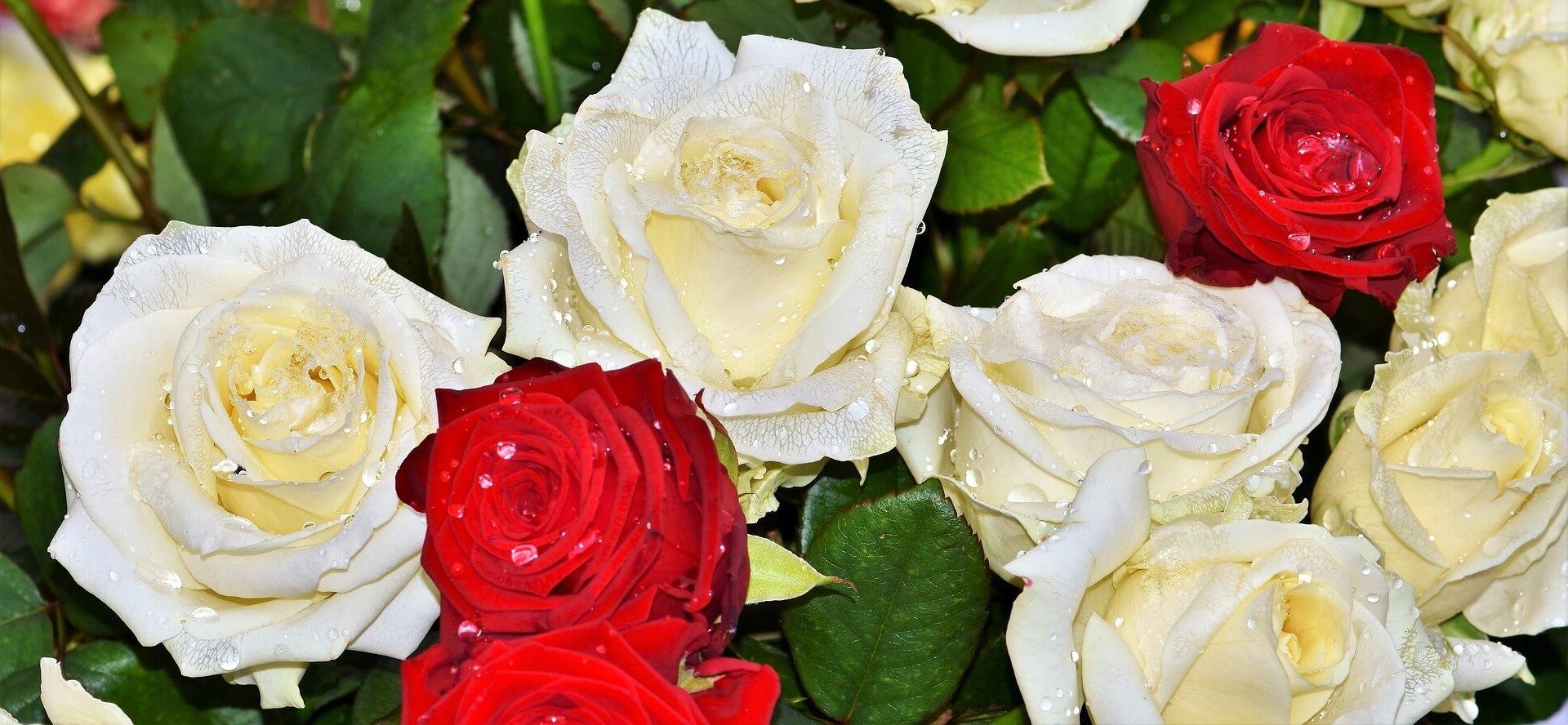 ¿Como mandar ramos de flores a Terradillos?