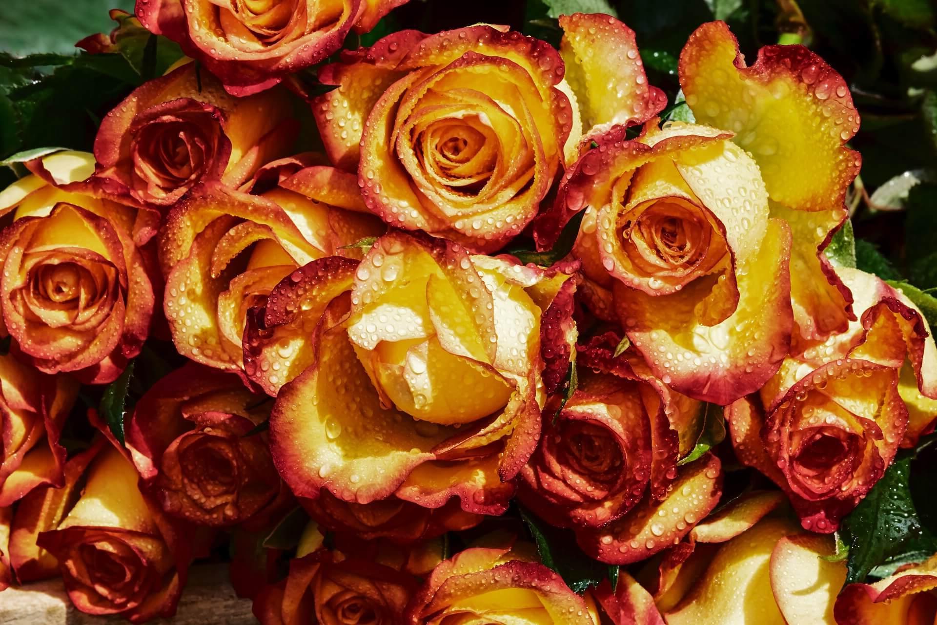 ¿Como enviar ramos de flores a Pamplona?