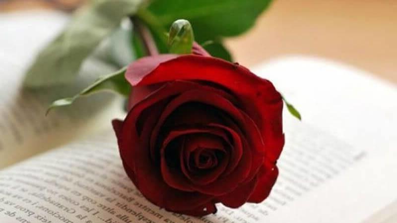 Envio Flores Sant Jordi
