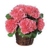 Aniversario 1 ramos de flores por aniversario